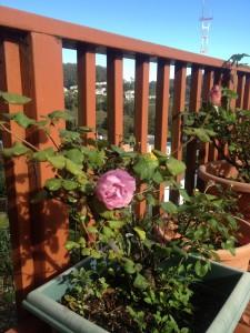 O brave rose
